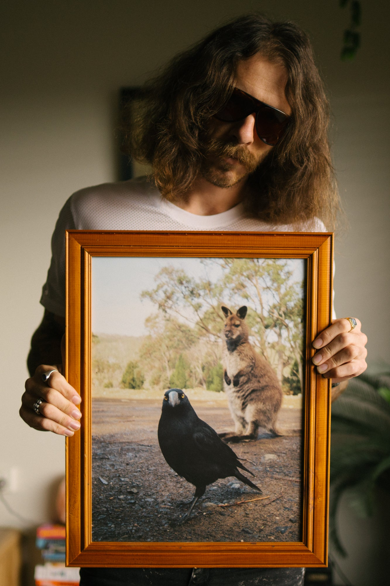 Wallaby and Currawong 40x50cm print