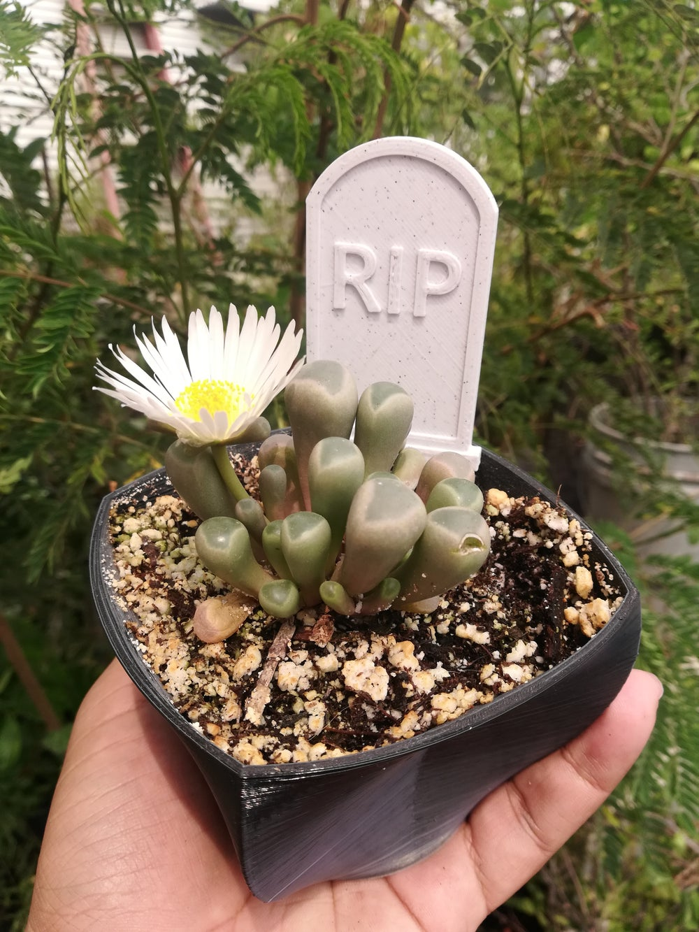 Gravestone Plant Marker