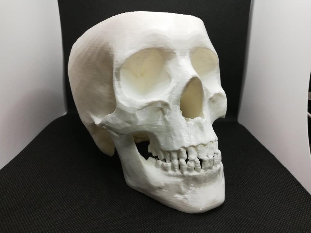 Skull Shaving Bowl