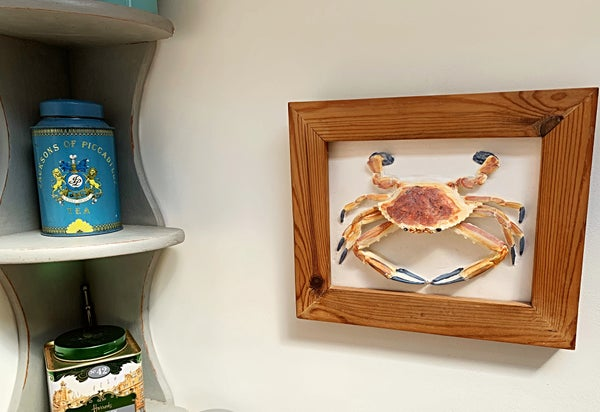 Image of Sea crab