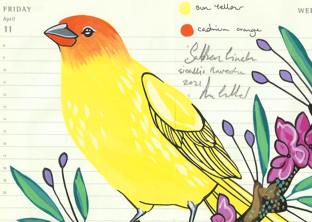 Image of Saffron Finch