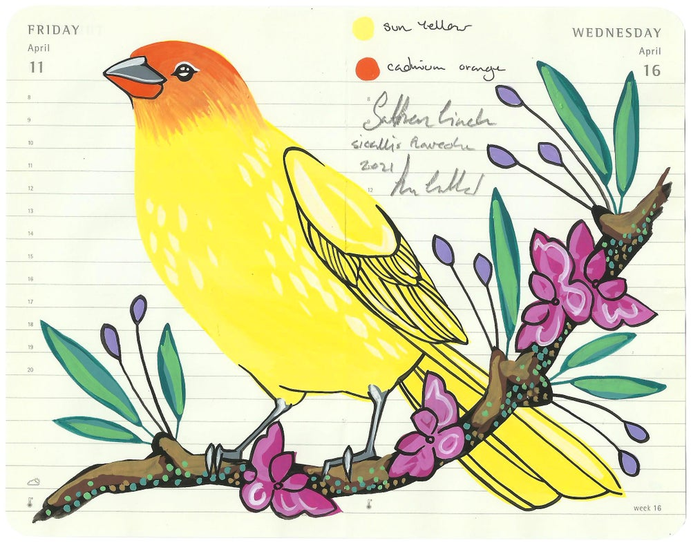 Image of Saffron Finch