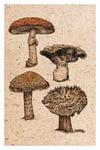Mushroom Collection 1