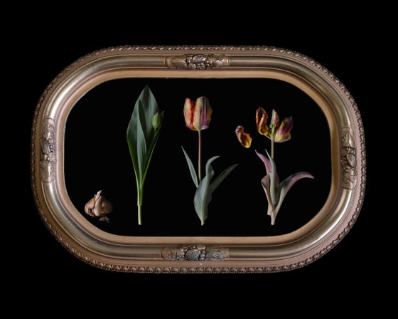 Image of 'Celeritas' in Antique Bubble Glass Frame