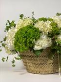 Cesto rústico de hortensias