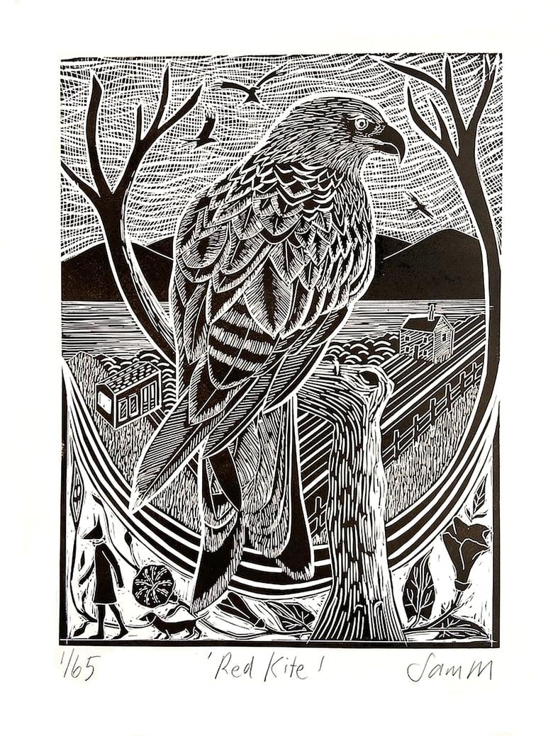 Image of Red Kite - Very dark brown and white