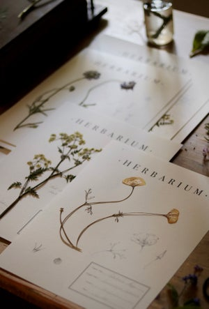 Image of Herbarium Sheets