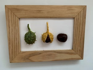 Image of Conkers