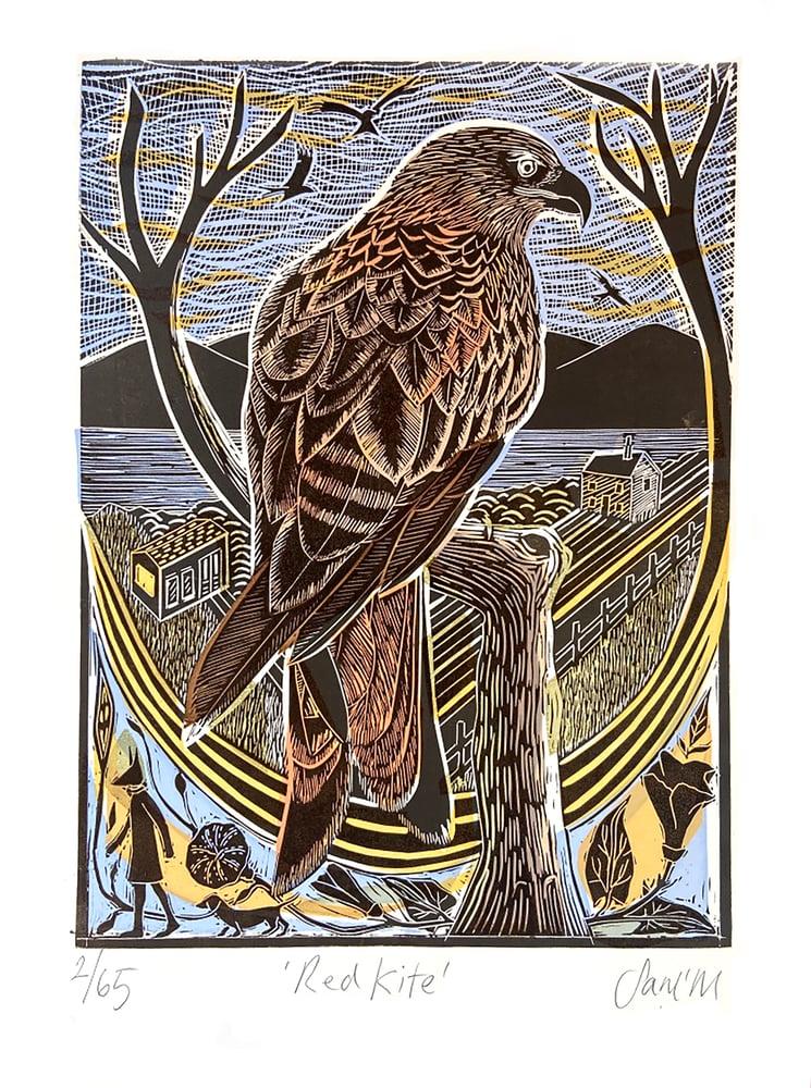 Image of Red Kite