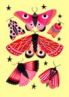 Butterfly Specimen A4 Print
