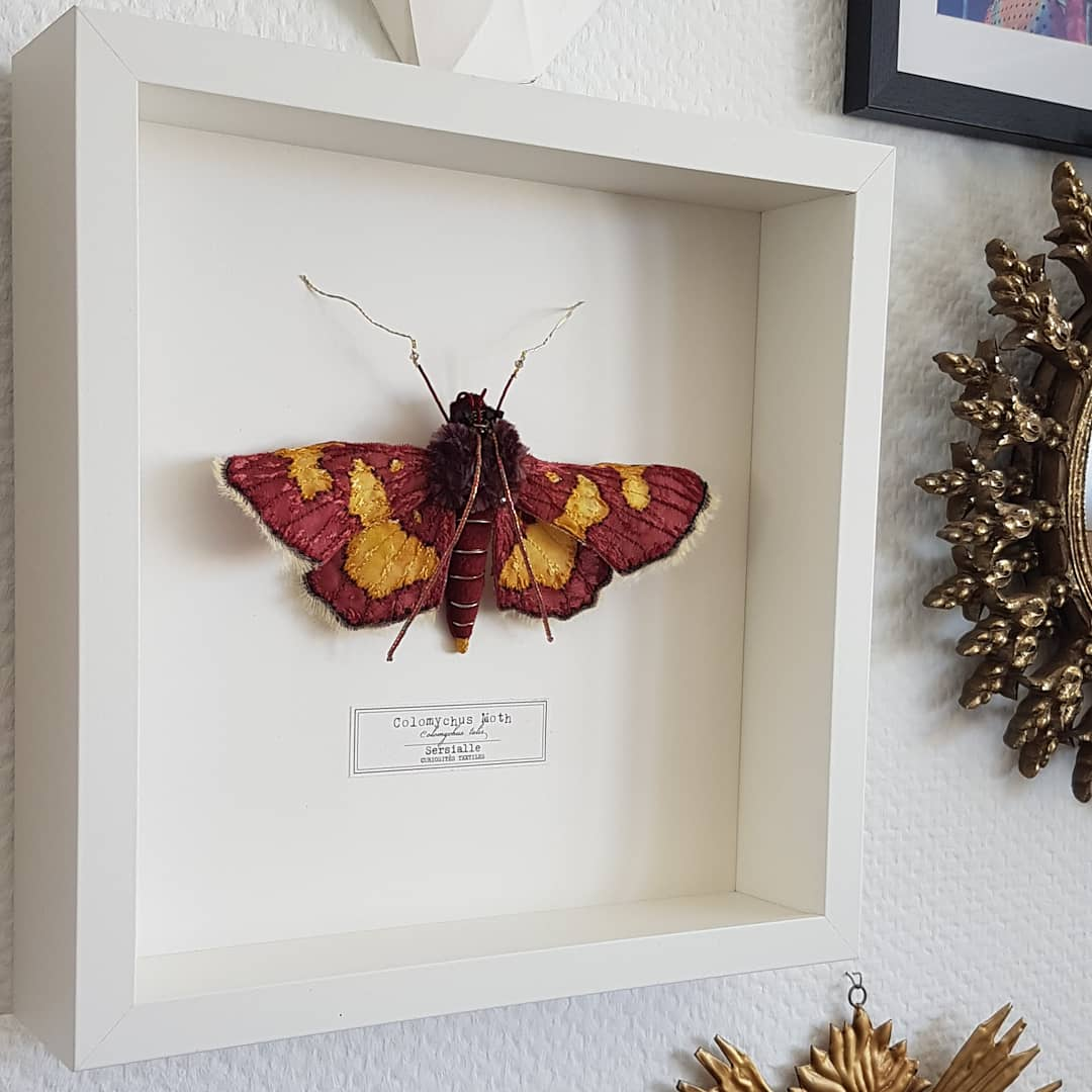 Image of Colomychus Moth