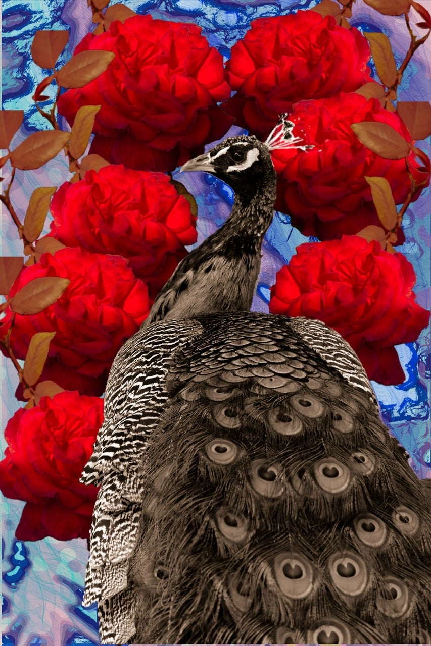 Image of Peacock and Roses