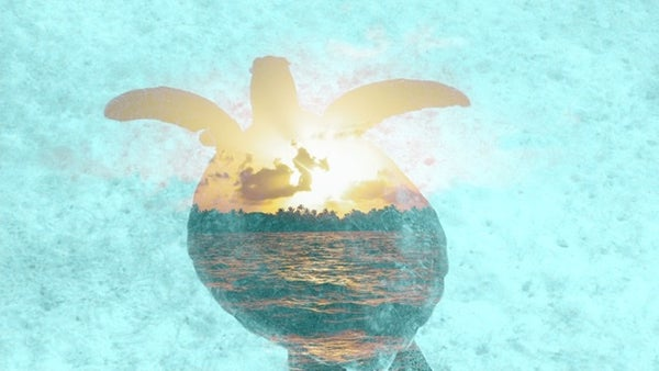 Image of Sea Turtle Sunset
