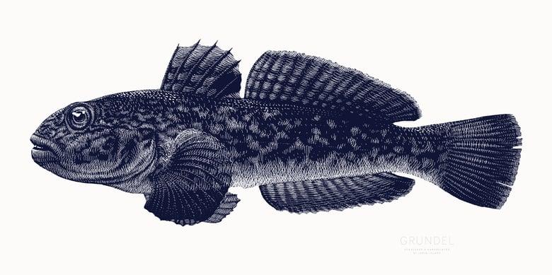 Image of »Grundel«