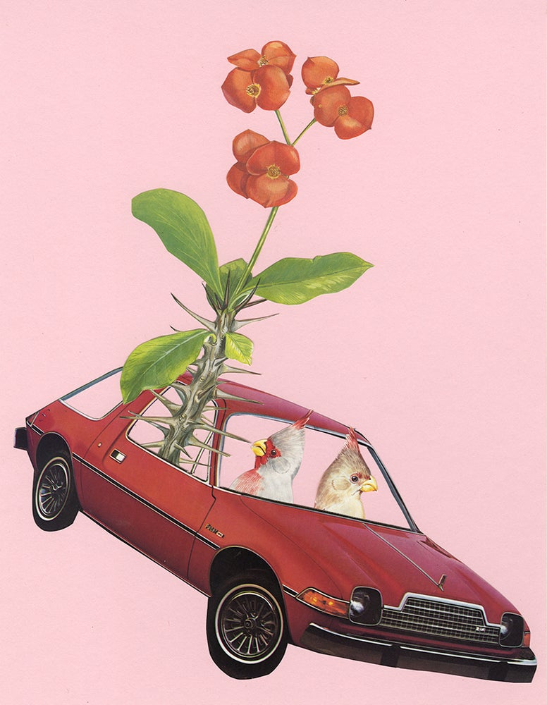 Image of A pair of Pyrrhuloxia in a Pacer with a prickly passenger. Limited edition collage print.