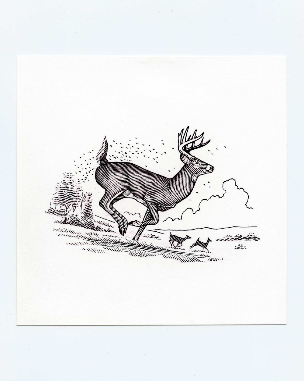 Image of White-tail Buck #3