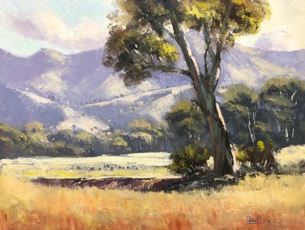 Image of Light On The Hills, Mudgee