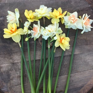 Image of Specialty Daffodils