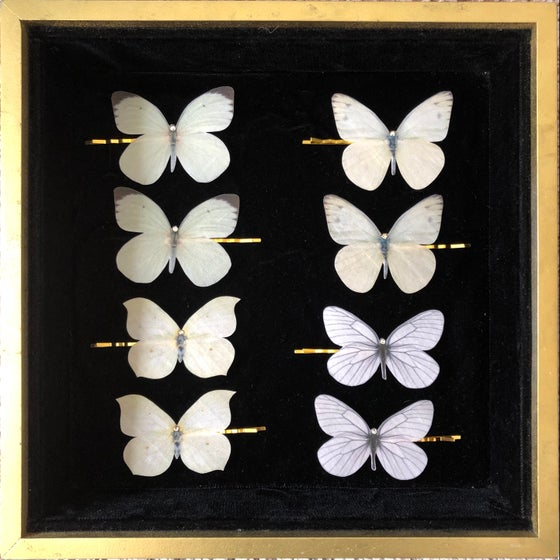 Image of NEW! Silk Butterfly Hair Pins - white & cream & grey