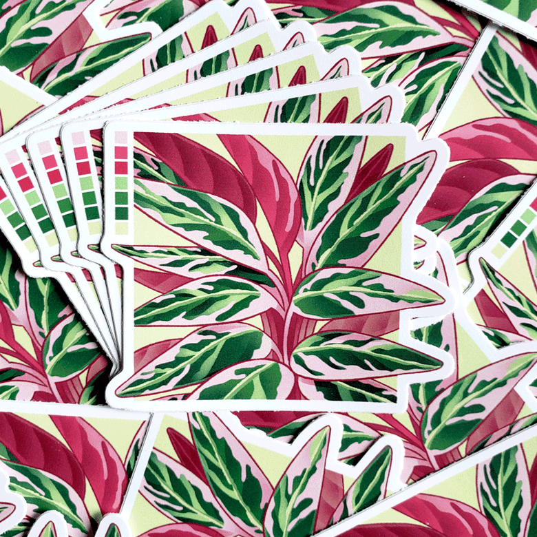 Image of Calathea Triostar - Sticker