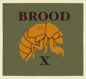 Cicada Shirt *PREORDER* (CM) sage