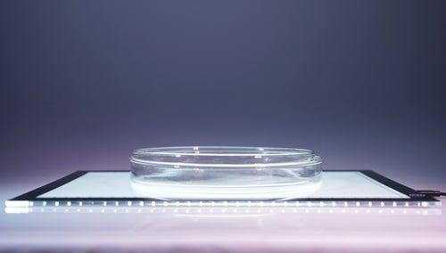 "Image of Petri Dish Set - Large 8"" Pair - for Liquid Light Shows"
