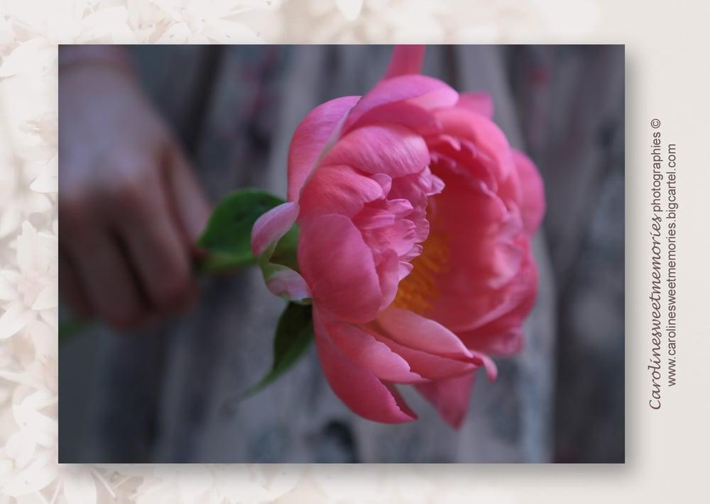 Image of La pivoine rose | carte postale