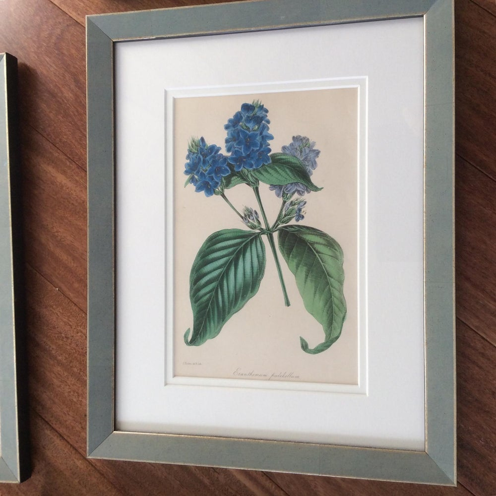 Late 19th Century Antique Hand Colored Botanical Prints Series - Set of 8
