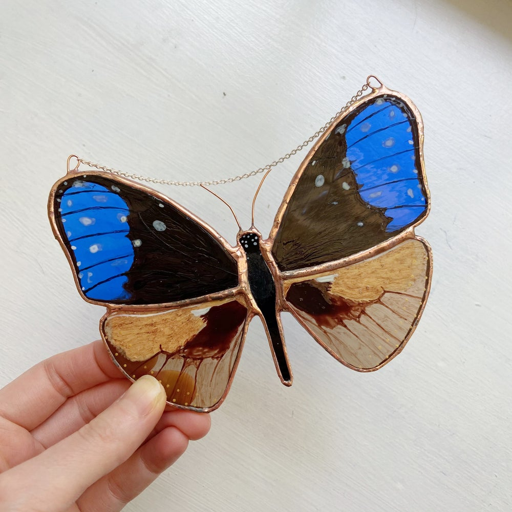 Image of Blue Crow Butterfly