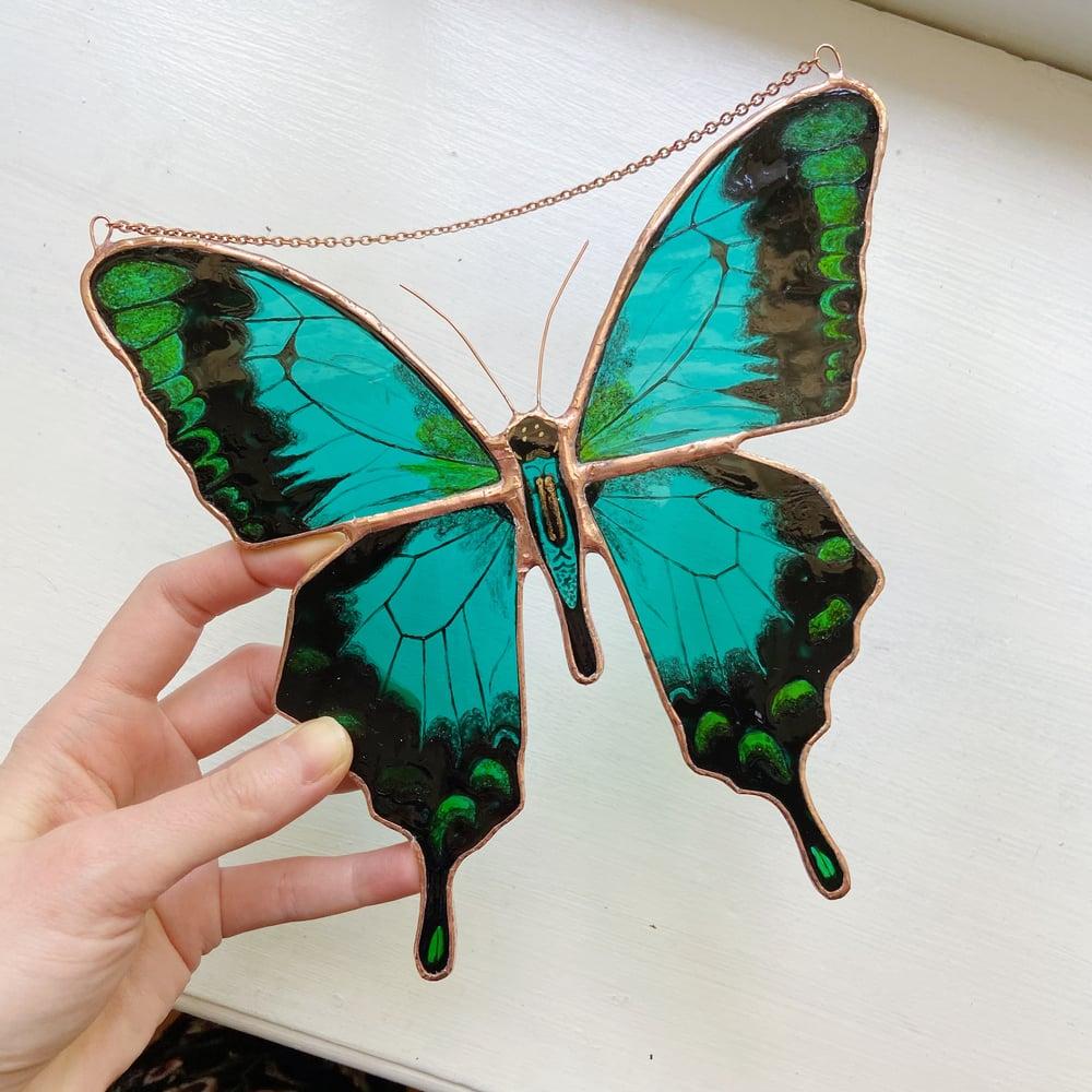 Image of Blue Green Swallowtail, Papilio lorquinianus