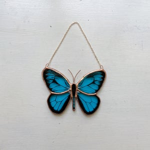 Image of Blue Night Butterfly