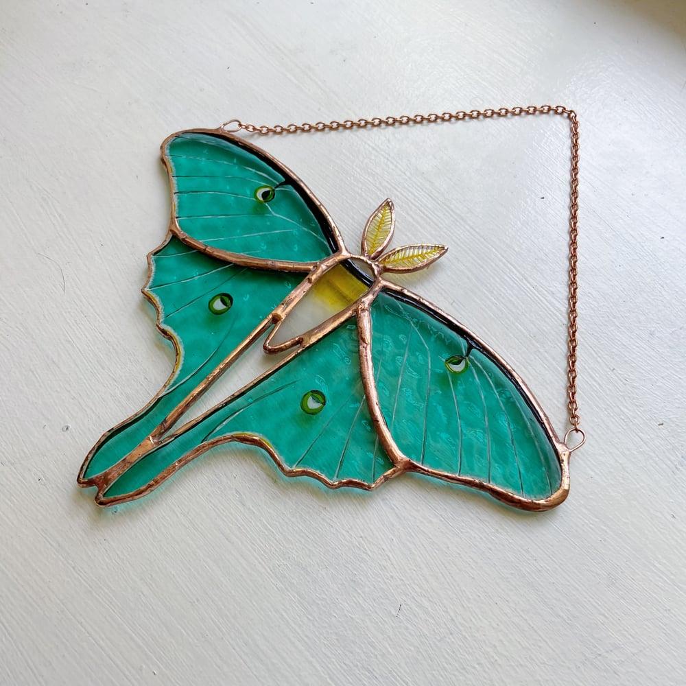 Image of Luna Moth no.2