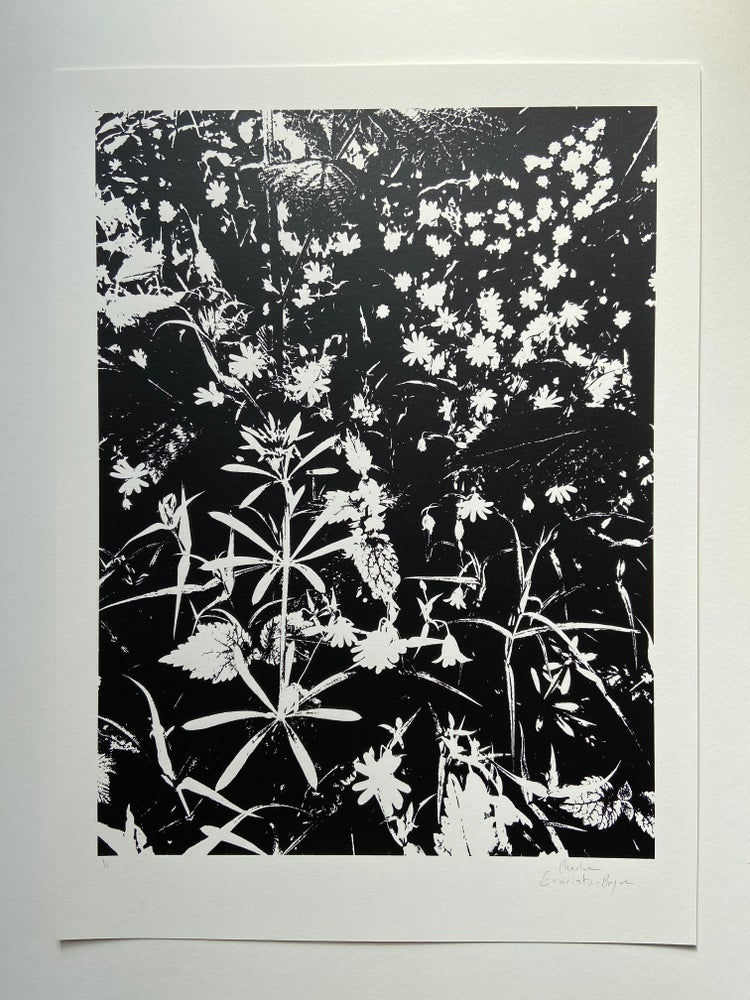 Image of Late Spring #5 (Monochrome)
