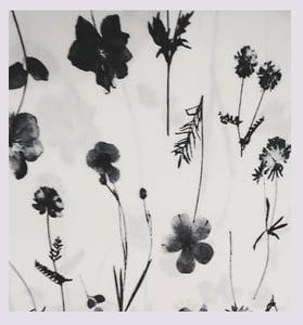 Image of Tissu: a black & white herbarium