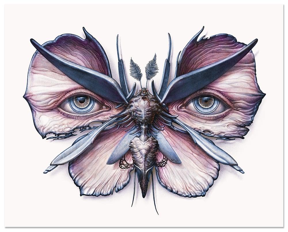 Image of Lepidoptera 6 & 7