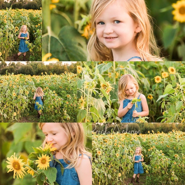 Image of Kids Only Sunflower Minis  - Please read all info before booking