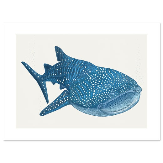 Image of Whale Shark 40x30cm