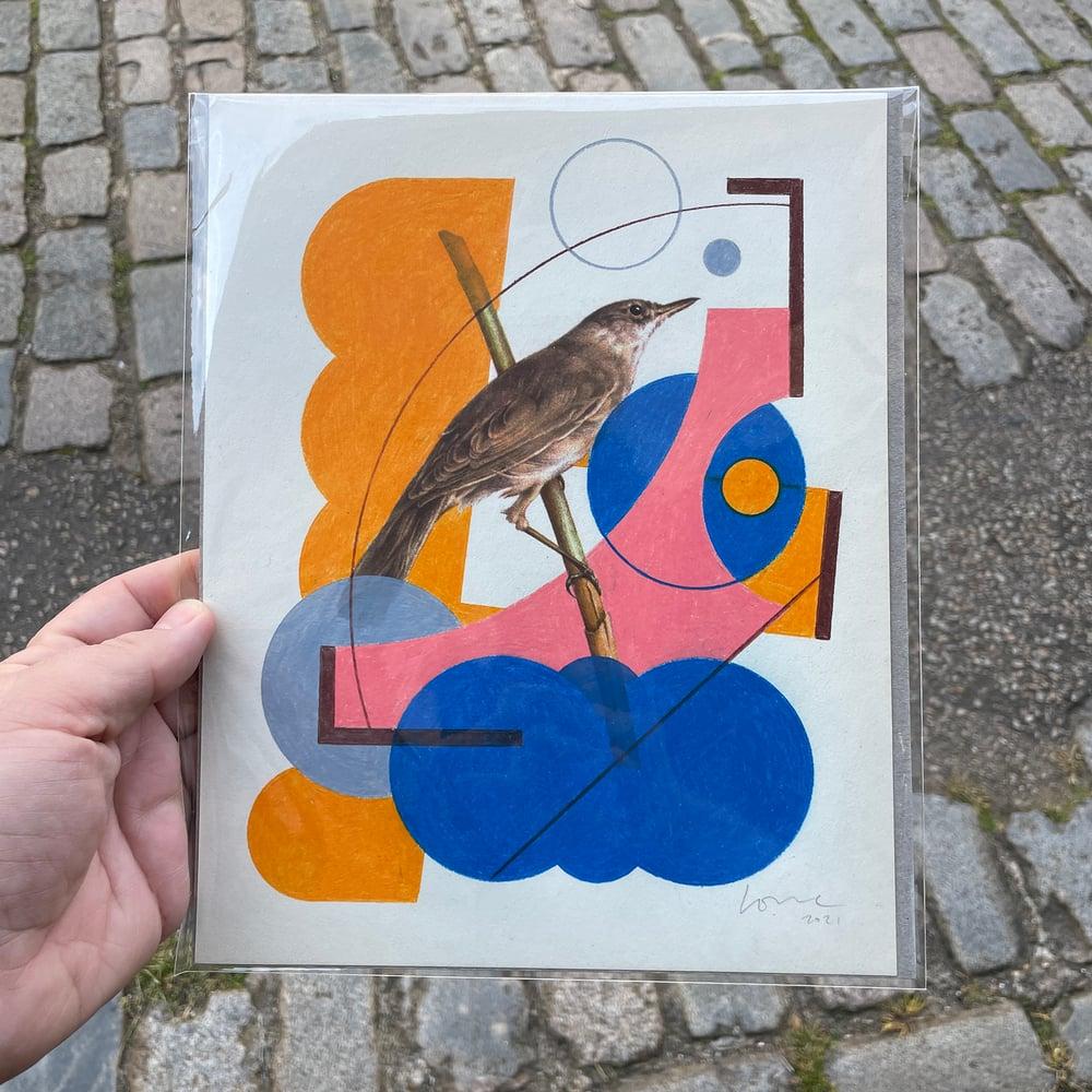 Image of Marsh Warbler (Original drawing over bird print)