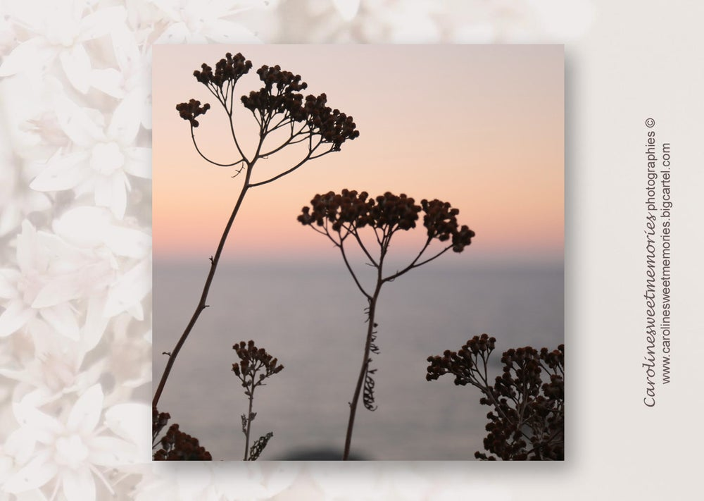 Image of Sunset time | carte postale