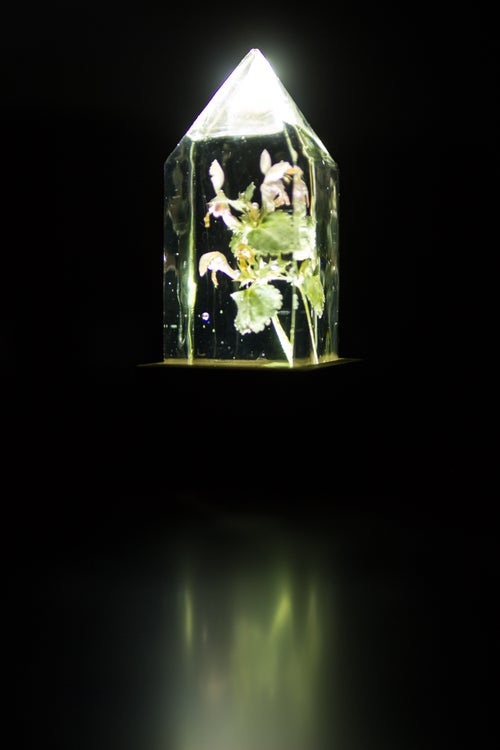Image of Deadnettle (Lamium maculatum) - Floral Night-Light #3