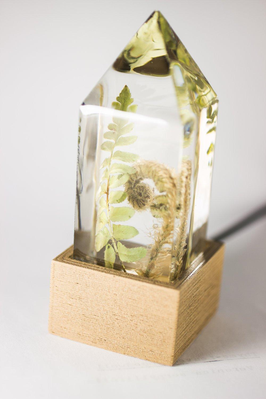 Image of Christmas Fern (Polystichum acrostichoides) fiddlehead - Floral Night-Light #2