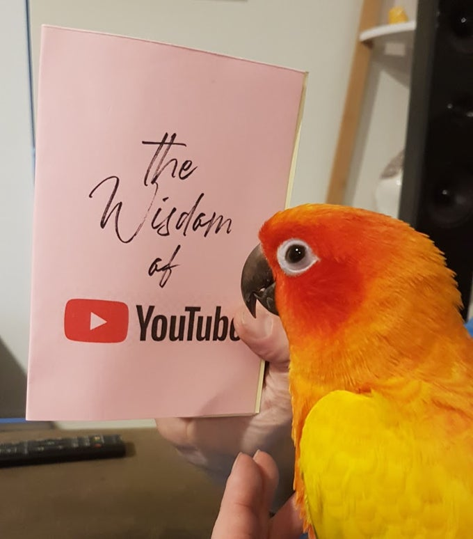 Image of The Wisdom of YouTube