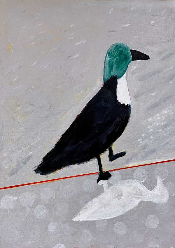 Image of Harbor Duck