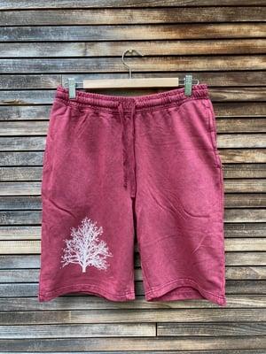 Image of Men's Maple Tree Shorts