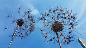 Image of Wire Alliums or Dandelion Clock