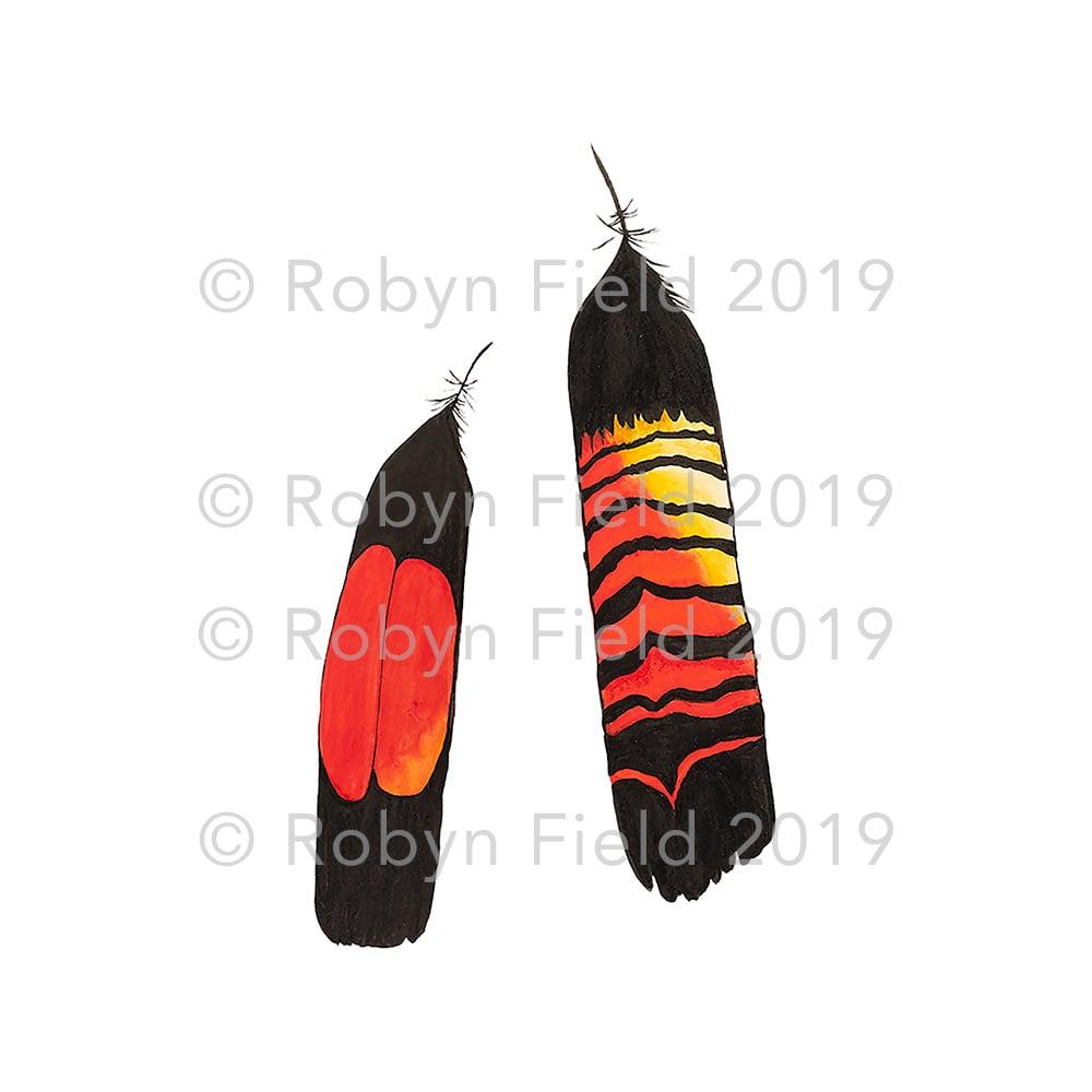 Image of Australian artwork print - Glossy black cockatoo feathers