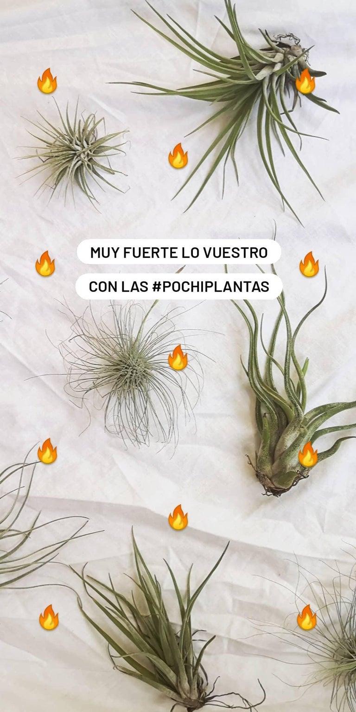 Image of Pochiplantas 3+3