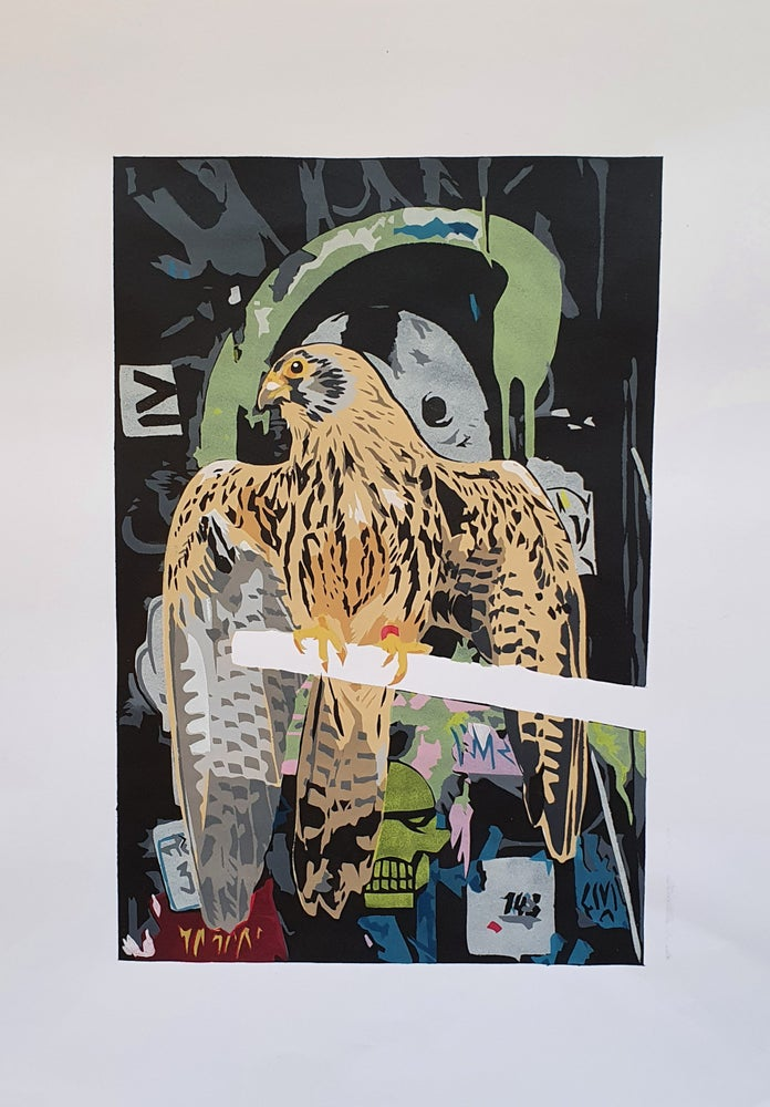 Image of Hawk in the City