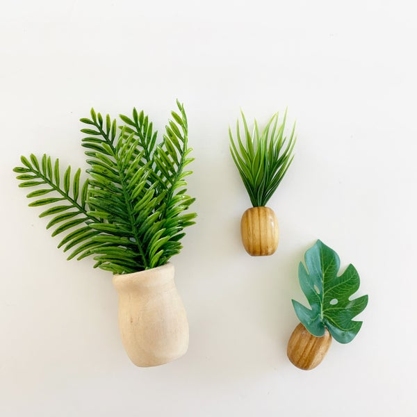 Image of Tropical House Plants