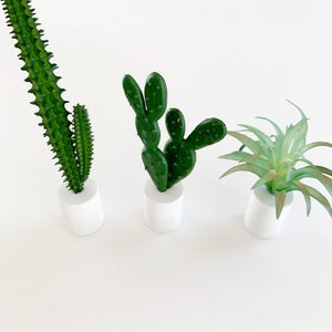 Image of Modern Potted Cacti and Agave